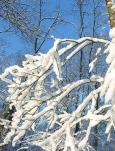 зима природа фото