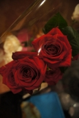 роза цветок картинка
