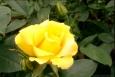 картинка цветочек