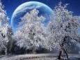 красивые фото природы зимой