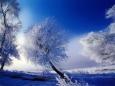 фото природы зимой