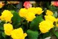 картинка красивый цветок