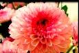картинки цветы букеты