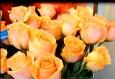 картинки цветок