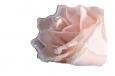 открытка букет роз