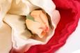 открытки +с розами